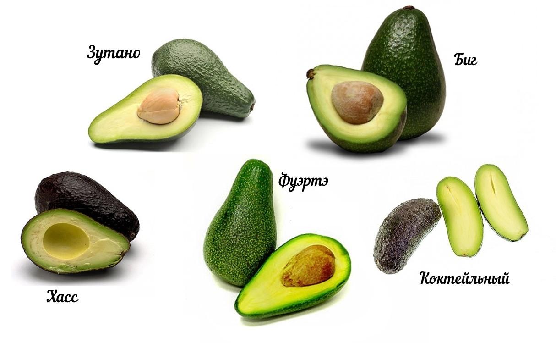 Картинки авокадо (89 фото)
