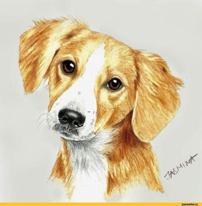 Прикольные картинки про животных рисованные (145 фото)