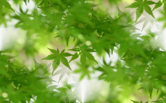 Зеленый цвет — красивые картинки (134 фото)