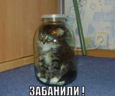 Смешные картинки котят с надписями (264 фото)