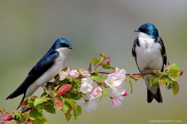 Картинки птицы на ветках (104 фото)