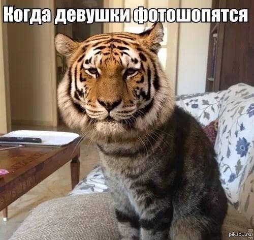Прикольные картинки про животных с надписью новые (100 фото)