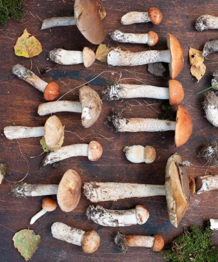 Картинки грибов (103 фото)