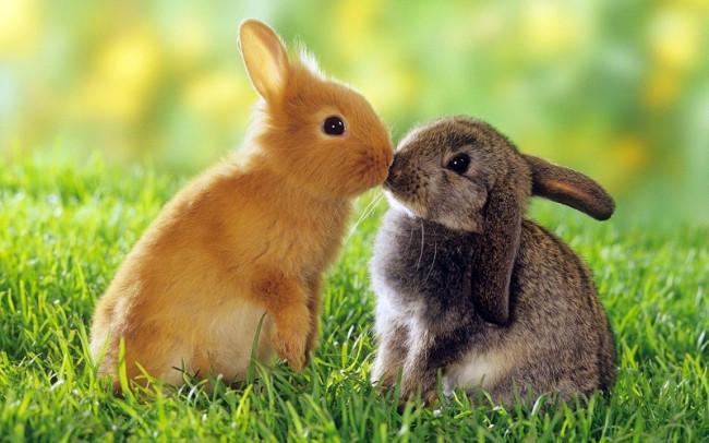 Кролики — красивые картинки (118 фото)