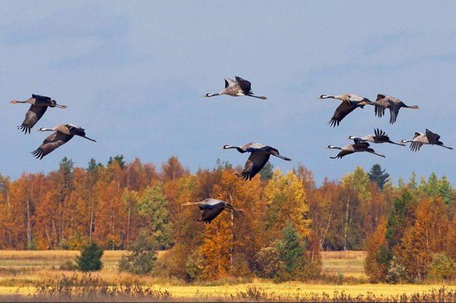 Картинки птицы осенью (94 фото)