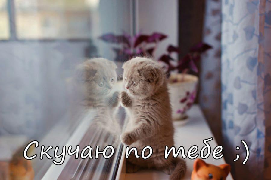Прикольные картинки: «Я скучаю!» (235 фото)