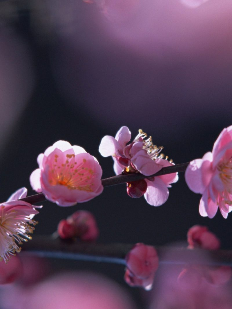 Картинки весна на заставку телефона (170 фото)