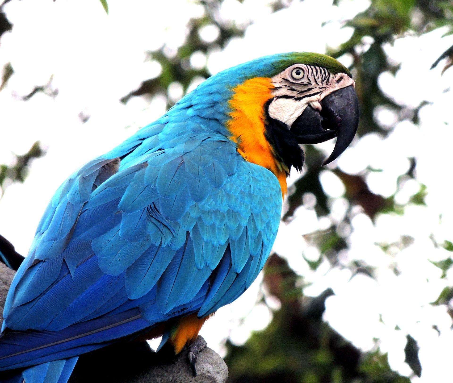 Красивые картинки попугаев (95 фото)