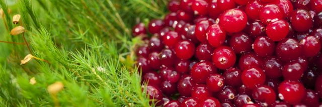Красивые картинки ягод на рабочий стол (145 фото)