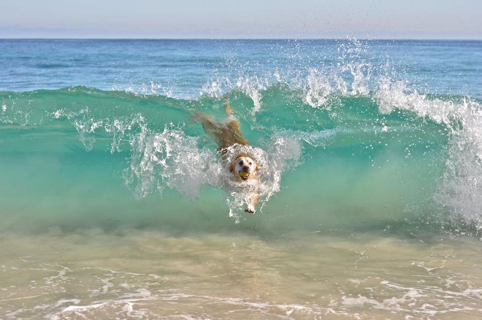 Прикольные картинки про море (201 фото)